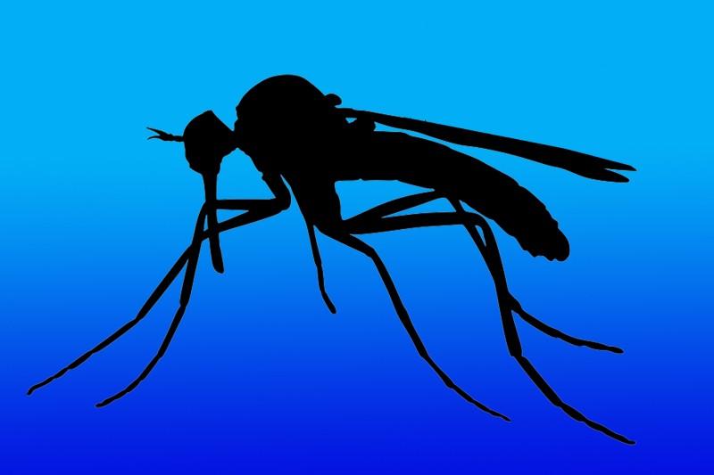 DGS emite orientação sobre doença por vírus Zika