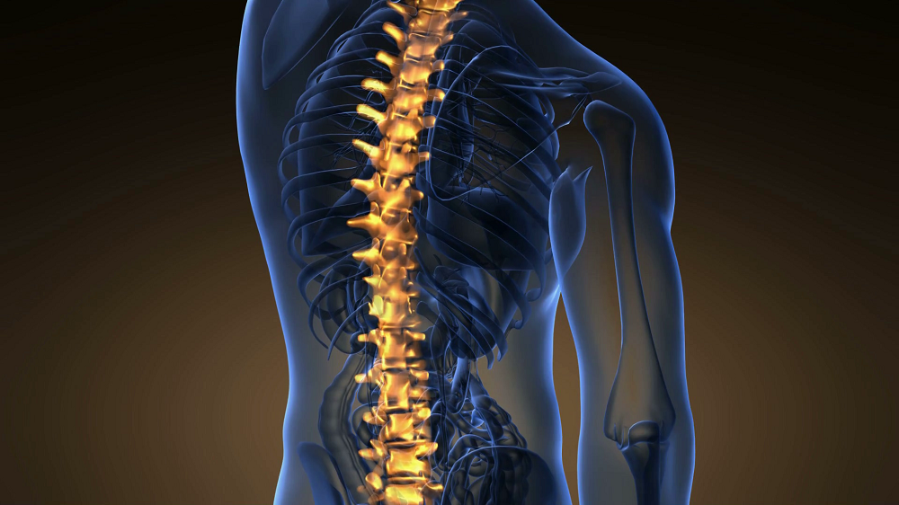 backbone-backache-science-anatomy-scan-of-human-spine-bones-glowing_r88npf98x_thumbnail-full01